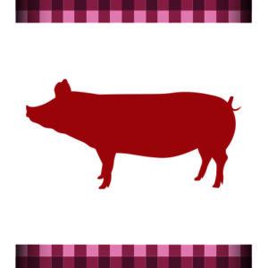Cerdo seleccionado hembra